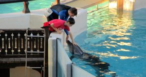 boys marineland